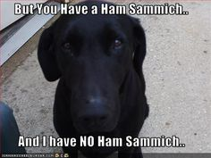 funny animal memes, animal pictures with captions, funny animals no ham sammich is bad Animal Captions, Funny Animal Memes, Dog Memes, Funny Dogs, Funny Animals, Cute Animals, Funny Memes, Smart Animals, Dog Funnies