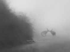 Metamorphosis of light - The Kiss? - Two Hares Near Pyms Chair Pictures Of The Week, Kiss, Wall Art, Chair, Prints, Image, Recliner, A Kiss, Kiss Me