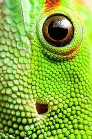 textuur dieren - schubben