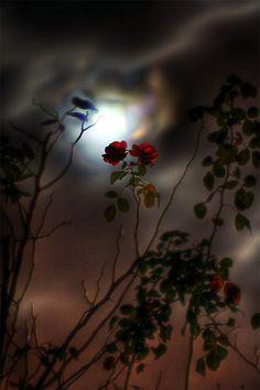 DARK-ROSE, Moon, De Heeg, Maastricht, Limburg, by AH.D.R. on flickr.