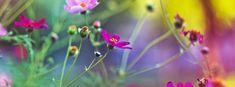 Amazing flowers facebook covers | Amazing flowers hd fb cover photos | Amazing flowers covers for timeline profile