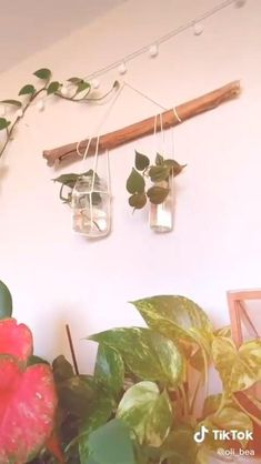 House Plants Decor, Plant Decor, Plant Wall Diy, Wall Plant Holder, Air Plant Display, Hang Plants From Ceiling, Things To Hang From Ceiling, Plantas Indoor, Decoration Plante