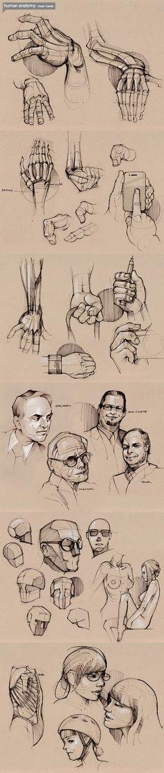 .anatomy