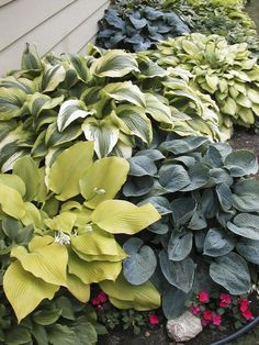 Different types of Hosta by shauna