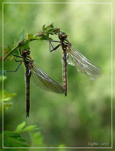 met pootje.... respect voor de schoonheid van de natuur, haar Schepper en de maakster van zulke prachtige foto's  http://jalbum.net/nl/browse/likes/album/1381349/user/1027130