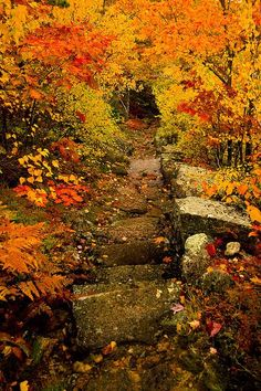 Beautiful fall foliage in Acadia National Park, Maine Foto Nature, All Nature, Beautiful World, Beautiful Places, Beautiful Pictures, Nice Photos, Belle Photo, The Great Outdoors, Autumn Leaves