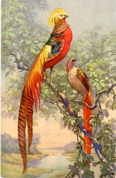 Bird of Paradise Vintage Tropical Bird Swiss by PostcardBoutique