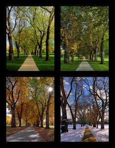 Take the same picture during all four seasons of someplace you love and you have great art for your home.
