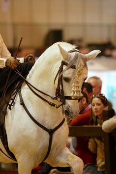 SICAB, SPANISH SIDE SADDLE, AMAZONA, HORSES, CABALLOS, LIFESTYLE, ESTILO DE VIDA.jpg