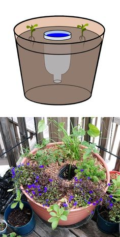 Keep your container garden happy and thriving on long hot days by installing a hidden water reservoir. All you need is an empty plastic bottle around the same height as your planter. It will be easier to start with a new planting than an established container.