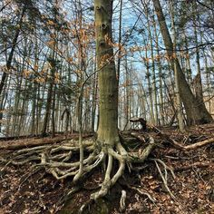 #ilovepa #forestthroughthetrees #naturerules #pennsylvania #treehugger #bluesky