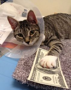 i don't want your dirty money cat. i'm not getting you any more kitten muscle relaxers.
