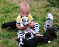 """""""I will love you little people like they love me."""" Aussie puppies"""