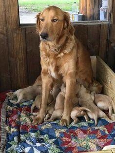 Az anyaság szépségei | Fotó via boredpanda.com