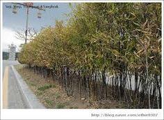 오죽헌 대나무에 대한 이미지 검색결과