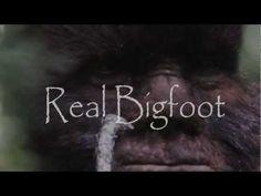 Incredible Bigfoot footage.  Todd Standing's 2011 Sylvanic Sasquatch compilation.