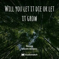 Roses// Shawn Mendes