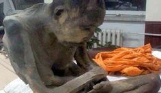 200-годишна #мумия на #монах може да е жива #археология #мистерии #Буда http://sanovnik.bg/n3-55166