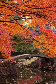 Japanese Garden #japan
