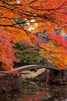 Japanese Garden- These Japanese Maple Trees show beautiful colors, and grow well in plenty of regions in the world. Think about it!