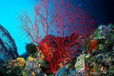 Resultado de imagem para foto de coral do mar