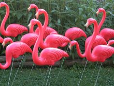 Flamingos!! I just had this kitschy idea to relief sculpture flamingos on the stucco wall, pink plastic yard ornament style.