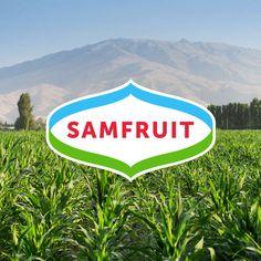 © BRANDEXPERT Freedom Island. Logo and brand identity.Samfruit