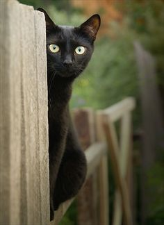 Beautiful black cat looking so cutely...click on picture to see more
