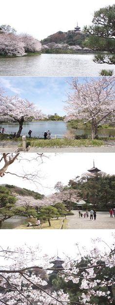 Sankeien Garden, Yokohama