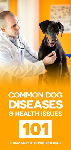 List: Common Dog Diseases and Health Issues 101 #health