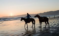 Reason #52: Horseback Ride on Pismo Beach. Get a unique natural experience while riding along sand dunes, crashing waves, and active wild life in Pismo Beach. No matter your experience level, this tour is bound to take your breath away. www.ClassicCalifornia.com #Discover101
