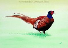 Pheasant Painting, Acrylic on Canvas, framed. Size 25 x 30 cm