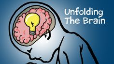 Can the way the brain folds determine how you think? Engineer Ellen Kuhl explains how mechanical forces affect the wrinkles in your brain. Subscribe to our c...