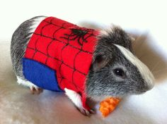 Spider-Man Guinea Pig Costume.  REALLY???? They should have put on the spandex leggings!