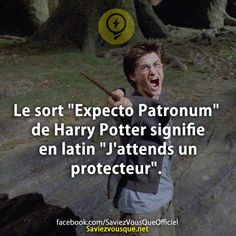 """The spell """"Expecto Patronum"""" of Harry Potter means in Latin """"I expect a protector"""". Saga Harry Potter, Harry Potter Cosplay, Harry Potter World, Anime Manga, Memes, Hogwarts, Did You Know, Funny Quotes, Positivity"""