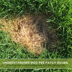 Dog urine can burn and damage grass, but a little knowledge and a few defensive measures can help reduce the dreaded pee patches in dog lovers lawns. Dog Urine, Dog Pee, Healthy Environment, Green Lawn, Lawns, Large Dogs, Factors, Patience, Real Life
