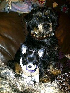 Buddy and Bella | Pawshake