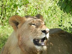 Jeep Safaris in Kenia, the best Holiday for the family http://www.safaris-in-kenia.de/