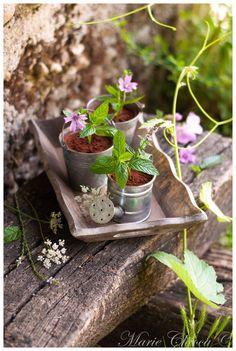 Petits pots légers de « mousse au chocolat du jardinier » (Avec des courgettes dedans… mais chuuut !) (Sans lait, Sans gluten, IG bas )