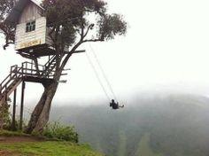 Tree swingin' the day away......