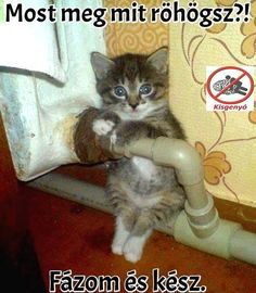 Én is haver ! Funny Images, Funny Photos, Kittens Cutest, Cute Cats, Funny Jokes, Hilarious, Bad Memes, Everything Funny, Cute Little Animals