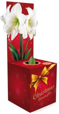 Bloembollen geschenken voor mailings of beurzen