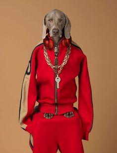 Marc Jacobs #Fall 17 #William Wegman #Vogue #Vogue Paris #Editorial #Dog #Fashion #Moda #Kombinler #Kombin_Önerileri #Sokak_stili #fashion #Güzellik #ünlüler #ünlü_Modası #Cilt_Bakımı #Saç_Modelleri #Abiyeler #Abiye_modelleri #Magazin #Tarz #Kuaza