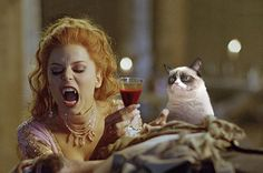 Community Post: 15 Universally Bad Movies Improved By Grumpy Cat