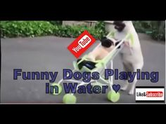 Funny Dogs Playing in Water !! -  #dog #funnydogs #puppy #doglover #animals #pet #cute #pets #animales #tagsforlikes Stop Your Dog's Behavior Problems! Click HERE to learn how! how much Dogs Love Swimming: Compilation video funny dogs learning dogs dogs love swimming Dogs in Pools  - #Dogs