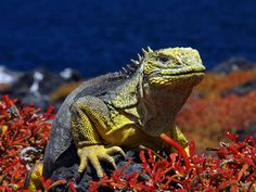 The Galapagos Islands: Choose from Scalesia Lodge, exploring the North & Central Islands, the Southern Islands or Santa Cruz, Genovesa & Santiago Islands. http://www.southamericaperutours.com/