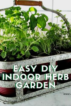 Fresh herbs in those individual packages are so expensive to buy in stores so we decided to put together a DIY Indoor Herb Garden Kit. One that is easy and inexpensive and we can enjoy fresh herbs all year. Herb Garden Kit, Water Garden, Greenhouse Gardening, Container Gardening, Organic Gardening, Gardening Tips, Growing Marigolds, Diy Jardin, Planting Garlic