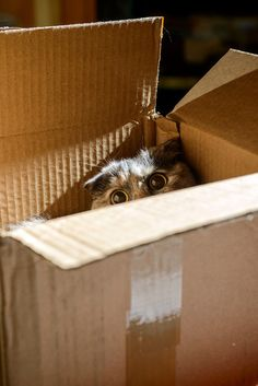 """""""Cats are cute.  Cats in boxes are even cuter.  Cats know this and make the most of it."""" --Author Unknown"""