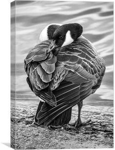 """Sleepy Goose"" by Jason Moss"