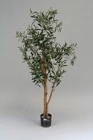 X-Olive Tree w/1156lvs & 30 Fruits 120cm